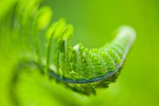 Free Fern Leaves Stock Photo - 17500220