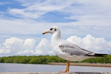 Free Seagull Standing On Concrete Stock Photo - 17505960