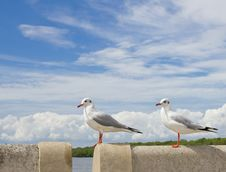 Free Seagull Standing On Concrete Royalty Free Stock Images - 17505979