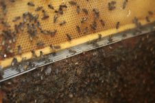 Free Bee Stock Image - 17506011