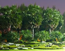 Free Palm Trees In The Park Stock Photos - 17506673