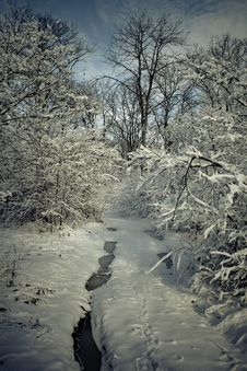 Free Winter Forest In Snow Stock Photography - 17507422