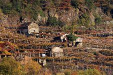 Free Vineyard Stock Photo - 17508610