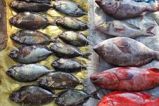 Free Fish Market Royalty Free Stock Photography - 17508637