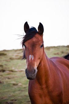Free Horse Running Free Royalty Free Stock Photos - 17512668