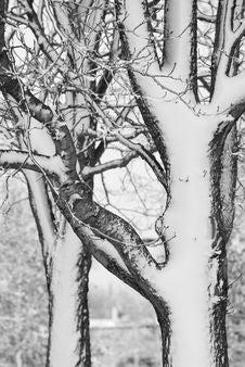Free Winter Stock Photo - 17512820