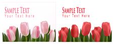 Free Flower Design Border Isolated On White. Vector. Stock Photo - 17512890