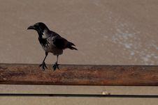 Free Crow Stock Photo - 17514830