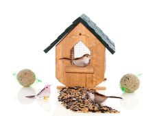 Free A Birdhouse With Birds And Seeds Royalty Free Stock Photos - 17517468