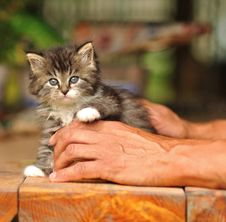 Free Kitten Portrait Royalty Free Stock Photos - 17518298