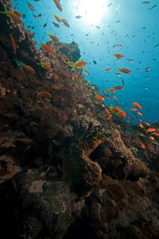Ocean, Coral And Fish. Royalty Free Stock Images