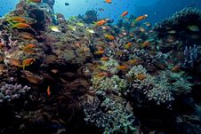 Free Ocean, Coral And Fish. Stock Photo - 17518830