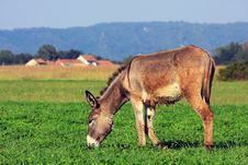 Free Donkey Stock Photo - 17518930