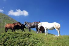 Free Horses On Meadow Stock Images - 17520114