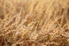 Free Autumn Puff Stock Photo - 17520700