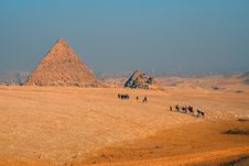 Free Camel Caravan Moving To The Pyramid Royalty Free Stock Image - 17520916