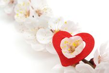 Free Heart And Sakura. Stock Photography - 17521412