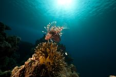 Free Lionfish And Ocean. Stock Photos - 17522503