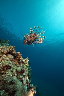 Free Lionfish And Ocean. Stock Images - 17524544