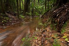 Free Rain Forest With Flowing Creek Water Stock Image - 17524981