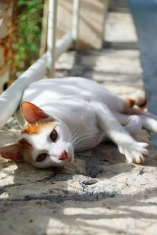 Free Street Cat Stock Photo - 17528700