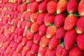 Free Fresh Strawberry For Background Stock Images - 17532234