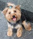 Free Dog Stock Images - 17534444