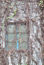 Free Window On Wall Covered By Liana Stock Photos - 17536653