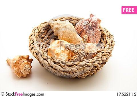 Free Sea Shell And Sea Star Royalty Free Stock Photo - 17532115