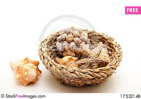 Free Sea Shell And Sea Star Royalty Free Stock Photos - 17532148