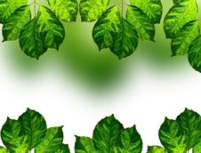 Free Fresh Green Leaves Frame Stock Image - 17530051