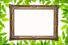 Background With Green Plant Frame Royalty Free Stock Photo