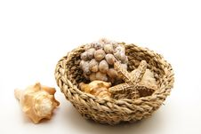 Free Sea Shell And Sea Star Royalty Free Stock Photos - 17532148