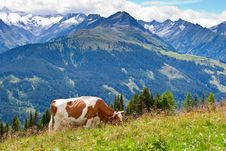 Free High Mountain Pasture Royalty Free Stock Images - 17532359