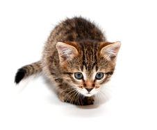 Free Kitten Ready To Attack Stock Photos - 17532543
