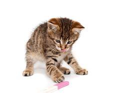 Free Kitten Plays Royalty Free Stock Photo - 17532545
