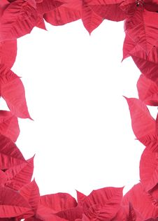 Free Poinsettia Frame Stock Photos - 17536613