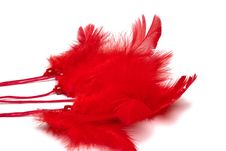 Free Red Feathers Stock Photography - 17537422
