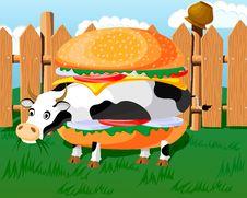 Free Cow Hamburger Stock Photography - 17538072