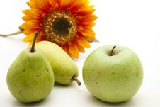Free Pear And Apple With Sunflower Stock Image - 17538451
