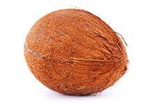 Free Coconut Isolated Royalty Free Stock Photos - 17538658