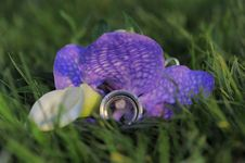 Free Two Wedding Rings On Violet Flower Stock Images - 17540384