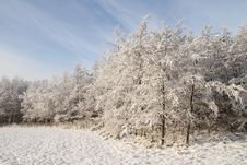 Forest Covered With Snow Royalty Free Stock Photos