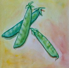 Free Pea Watercolor Royalty Free Stock Photography - 17546727