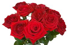 Free Bunch Of Roses On White Background Stock Images - 17548674