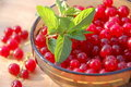 Free Redcurrant Stock Photos - 17553693
