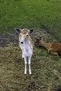Free Animal Stock Photo - 17555240