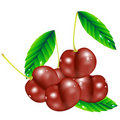 Free Group Of Cherry Berries Stock Photography - 17558192