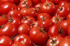 Free Tomatoes Royalty Free Stock Image - 17550146