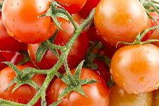 Free Cherry Tomato Stock Photos - 17551413